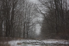 winter is escape II (Mindaugas Buivydas) Tags: lietuva lithuania color winter december snow blizzard snowstorm mood moody forest tree trees sadnature nemunasdeltaregionalpark nemunodeltosregioninisparkas šilininkai mindaugasbuivydas dark darkness favoriteplaces memelland
