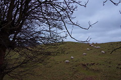 1444-04L (Lozarithm) Tags: avebury landscape sheep henges pentax zoom k50 28105 hdpdfa28105mmf3556eddcwr