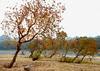 Tallowtrees 烏桕 (MelindaChan ^..^) Tags: guilin china 桂林 tallowtrees 烏桕 tree plant autumn fall branch art chanmelmel mel melinda melindachan