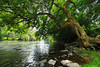 Tree by the River (tomcanon68) Tags: canon40d canon canon1018mmis wideangle tree river tulpehockencreek gringsmill pennsylvania pa reading creek