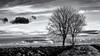 We must stick together... (Ody on the mount) Tags: anlässe bäume em5ii fototour himmel mzuiko4518 omd olympus pflanzen schwäbischealb silhouette tiere vögel wolken bw clouds monochrome sw sky trees römerstein badenwürttemberg deutschland de