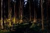 Week 51 - Artistic: Fear - Dark Forest #dogwood2017week51 (MrFox9) Tags: m42 flektogon flektogon35f24 ausjena carlzeissjena dark dogwood52 dogwood2017 dogwood2017week51