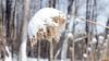 Arbuste, Parc du Lac Beauchamp en Hiver, Gatineau, Canada - 4200 (rivai56) Tags: arbuste parcdulacbeauchampenhiver gatineau canada québec ca winter sonyphotographing neige snow