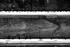 Droplets (Mario Ottaviani Photography) Tags: sony sonyalpha italy italia paesaggio landscape travel adventure nature scenic exploration view vista breathtaking tranquil tranquility serene serenity calm marioottaviani avventura natura esplorazione black white blackandwhite monochrome biancoenero macromonday macro monocromo blackwhite bw droplets goccioline