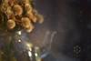 Dandelions (Zara Calista) Tags: dandelions 180mm tamron pot tea glass still life d750 nikon