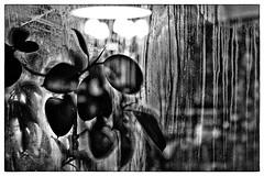 inside it's warm (Armin Fuchs) Tags: arminfuchs window winter würzburg glass plant