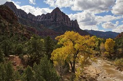 The Watcher - Fall in Zion (Alan Amati) Tags: amati alanamati america american usa us ut utah zion zionnationalpark zionnp np nature national nationalpark landscape fall fallcolor virginriver river steram water watcher thewatcher southwest goldencircle tree rock rockformation topf25