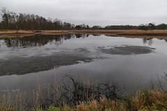 De Maten (lluunnoo) Tags: reed water lake ven mere limburg genk dematen naturereserve