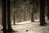 Legend (PetschoX5) Tags: petscho freedomstreaming deutschland germany canon fotografie photography 700d legend weiss white schnee snow wälder nebel fog