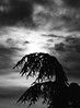 winter skies (saraconve) Tags: sky winter tree nature clouds black white bnw bw bianco e nero bn cielo nuvole photography fotografia contrast contrasto natura inverno nikon coolpix nikoncoolpix noise disturbo