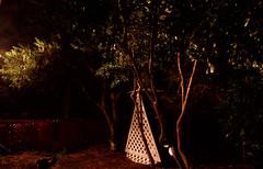 _MG_2908.CR2 (jalexartis) Tags: nightphotography night nightshots rain