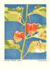 Japanese-lantern (Japanese Flower and Bird Art) Tags: flower japaneselantern physalis alkekengi solanaceae masaki yoshida modern woodblock print japan japanese art readercollection