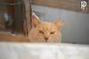 Gato (-Patt-) Tags: animal cat sanctuary ong animalessinhogar ash uruguay montevideo canelones gatos cats gato