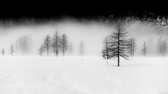 Spooky trees (andreasbrink) Tags: italy landscape mountains winter alpedevero snow blackwhite mini minimalism fccfog