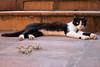 365-354 (Letua) Tags: tuna amor amorgatuno animal cat gato kitten kitty love mascota pet portrait retrato tenderness ternura