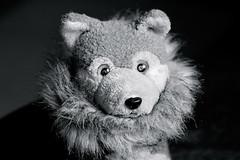 Today I've made myself beautiful - ... for the holidays. (WolfiWolf-presents-WolfiWolf) Tags: wolfiwolf wolfi wolf eneamaemü universum schön derschönste dersuperlativste beautiful festtage holidays 2412 xmas armani halskrause pelz ruffle fur scarf butler butlers fuddler huddler blau augen blue eyes ohrwascherl lupus 狼 ተኩላ ဝံပုလှေ หมาป่า ਬਘਿਆੜ ஓநாய் карышкыр farkas farky ತೋಳದ mbwa mwitu తోడేలు ब्वाँसो নেকড়ে الذئب λύκοσ વરુ īlio hae זאב भेड़िया қасқыр ចចក 늑대 волк madadhallaidh ചെന്നായ لېوه گرگ вовк гург වෘකයා بگھڙ بھیڑیا воўк impisi dasschenken pracht i yo liebe love grazie stüben bienchen
