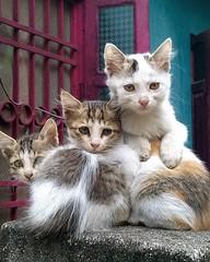 kitten candid streetphotography smartphonephotography... (Photo: draskd on Flickr)