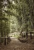 Peaceful stroll through the bamboo forest (PeterThoeny) Tags: saratoga california siliconvalley sanfranciscobay sanfranciscobayarea hakonegardens park garden japanesegarden tree bamboo bambootree forest bambooforest path trail sony sonya7 a7 a7ii a7mii alpha7mii ilce7m2 fullframe vintagelens dreamlens canon50mmf095 canon 1xp raw photomatix hdr qualityhdr qualityhdrphotography fav100