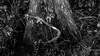 P1011624.jpg (Michael Bartosek) Tags: everglades 2017 michaelbartosekphotography epl3 olympus florida