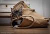 Shopping (Ronald Dubbeldam) Tags: kittens cats katten