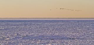 Frozen Cape Cod Bay - Best Wishes