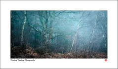 Winter on the Common (Chalky666) Tags: tree trees wood woodland common fog fern southdowns westsussex painterly art landscape