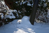 Snowy Blanket (Jules (Instagram = @photo_vamp)) Tags: winter snow december saginawmichigan isitspringyet stuffinmybackyard wintertrees jackolantern