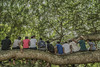 Heavy load for one branch (Christoph H-P) Tags: tree branch nature botanic green group people gathering leaves rest garden sitting relax break youth strong wood forest colors feet crew