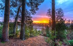 Lions Hill Sunrise (nicklucas2) Tags: landscape sunrise sun flare tree pine frost cloud