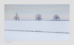 Three and a bit (Stuart Leche) Tags: agriculture boundary fence frost gate hemplowhills northamptonshire scenic shelter snow stuartleche trees winter woodland farmland wood wwwstuartlechephotography