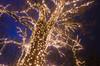 wonder (sixthofdecember) Tags: christmasgarden christmas christmaslights botanicalgardens botanischergarten light lights fairylights dark darkness night nightshot nikon nikond5100 tamron tamron18270 outside outdoors snow winter tree trees nature