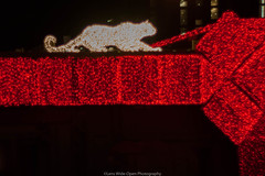 Cat on Lights (jomak14) Tags: 2017 christmasinnyc fotodioxpropktom43adapter gf2 microfourthirds panasonic pentax50mmf12 christmaslights fifthavenue manhattan newyorkcity caturday manualfocus vintagelens kmount smcpk50mmf12