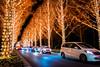 Merry Christmas! (ROHM Illumination, Kyoto) (Marser) Tags: xt10 fuji raw lightroom japan kyoto illumination car nightview longexposure lights tree 京都 ロームイルミネーション イルミネーション