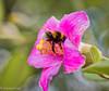 171227 171224 (friiskiwi) Tags: macroflowers