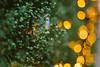 We All Lean Toward the Light (freyavev) Tags: belgrade beograd filipakljajica patrijarhavarnave green greenery plants lights bokeh bokehlicious 50mm mikasniftyfifty niftyfifty vsco outdoor detail nature urbannature urban serbia srbija
