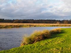 River Wey at Walsham Meadow-EC290179 (tony.rummery) Tags: em10 evening eveningsun mft microfourthirds nationaltrust omd olympus pyrford riverwey towpath winter woking ripley england unitedkingdom gb