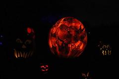 IMG_6480 (comtrag) Tags: jackolanterns rogerwilliamszoo rhodeisland halloween pumpkins pumpkincarving