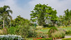 Cheetal Grand gardens (Pejasar) Tags: cheetalgrand restaurant khataulibypass nh58 muzaffarnagar uttarpradesh251201 india gardens plants nature blooms flowers landscape