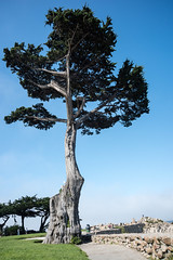 2017-AugSep-California-224 (4x4Foto) Tags: california loverspoint montereybay pacificgrove pacificocean aquarium beautiful beauty centralcoast cypress flowers nature plants redwoods rocks seagulls seals seaside sunset trees villages water virginia unitedstates