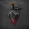 When we first locked eyes (Hayley Roberts Photography) Tags: heart black flower blood comingtolife digitalmanipulation color fineart composite love dark drip photography photograph valentine romantic photoshop pixelsquid romance