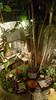 Garden setting (Roving I) Tags: garden settings decor themes interiordesign plants trees greenery armchairs cafes restaurants gecko hue tourism vertical vietnam
