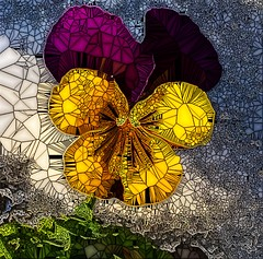 Stained Glass Pansy In Snow (mo-barton.pixels.com) Tags: pansy snow stained glass mo barton flower mosaic digital art
