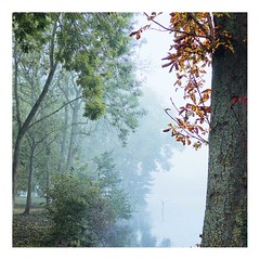 Hiver sur l'étang (3) (Marie Hacene) Tags: hiver vertlepetit étang arbres brouillard