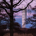 Turning Torso behind the trees