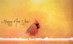 Happy New Year my Flickr friends!! (Dotsy McCurly) Tags: happynewyear male cardinal snow snowing adobe photoshop nikond850 nikon200500mm nj newjersey 7dwf freetheme northerncardinal