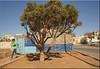 Café la Ro....sa (mhobl) Tags: café sidiifni tree blue maroc morocco