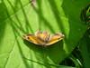 End of season (Lexie's Mum) Tags: walk walking nature countryside warwickshire butterfly