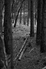 Path (sam.naylor) Tags: photo walk colour pentax k5 digital dslr winter nature plants wood trees grass bush park uk britain woods forest green 85mm tree macro black white monochrome