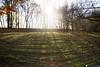 bosco buri (formicacreativa) Tags: boscoburi villaburi verona portosanpancrazio alberi albero prato erbaparco campo cielo foresta foschia adige fiumeadige