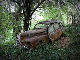 L'improbable bête des forêts.